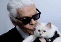 Кошка Карла Лагерфельда запускает коллекцию в память о нем